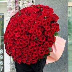 301 красная роза 70 см фото
