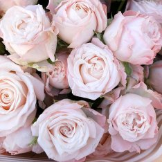 Bouquet of 17 spray roses Bombastic photo
