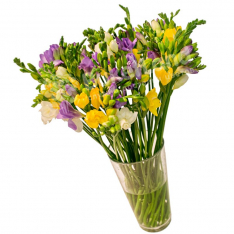 Bouquet of 45 freesias photo