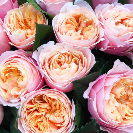 Bouquet of 51 pion-shaped roses photo