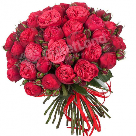 Букет из 55 пионовидных роз фото