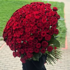 301 METER red rose photo