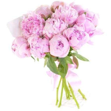 17 розовых пионов фото