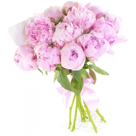 17 pink peonies photo