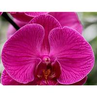 Правильный уход за орхидеей в домашних условиях