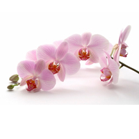 Charm of Orchids