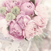 Fairy Peonies: All About Peonies