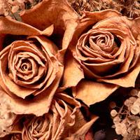 Сушка цветов: правила и советы