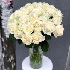 Белая роза Аваланч фото