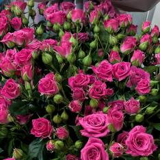 Кустовая розовая роза 50-60 см фото