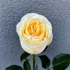 Pion-shaped rose in assortment photo