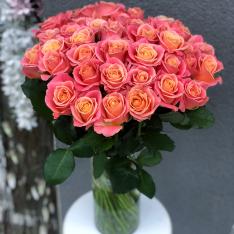 Роза Мисс Пигги фото