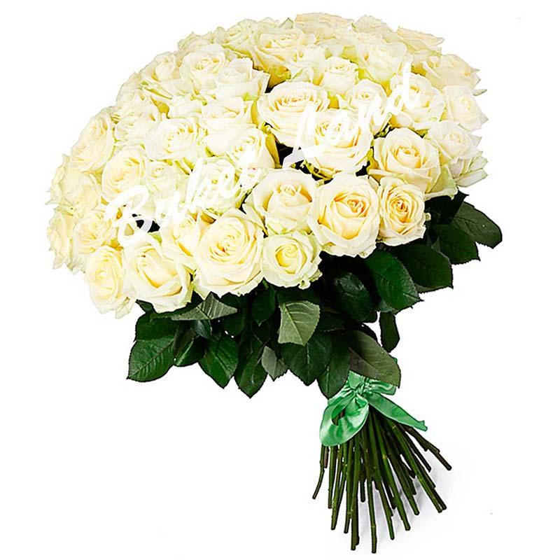 51 белая роза Аваланч 60 см