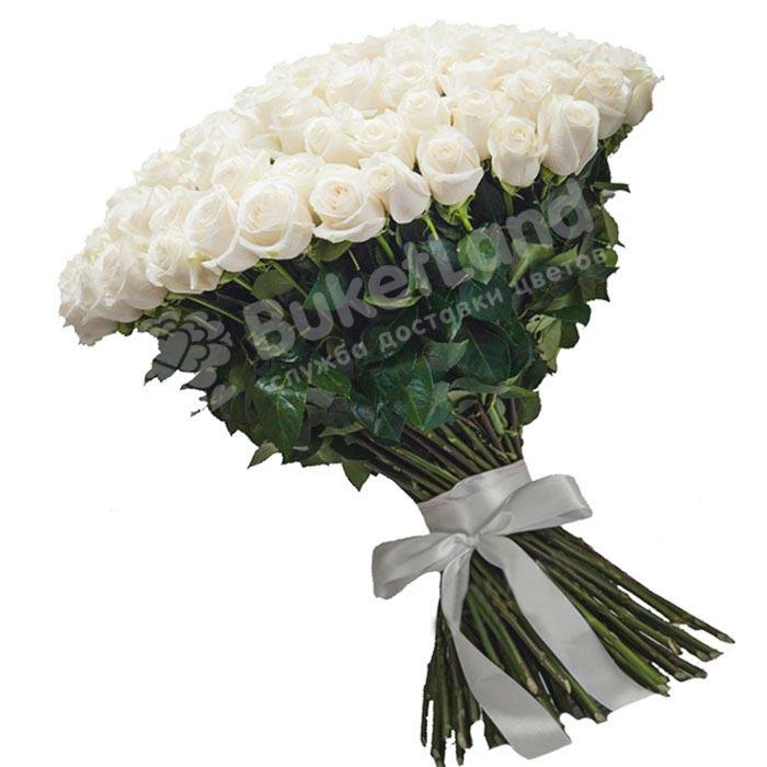 101 белая голландская роза Mondial/White Chocolate