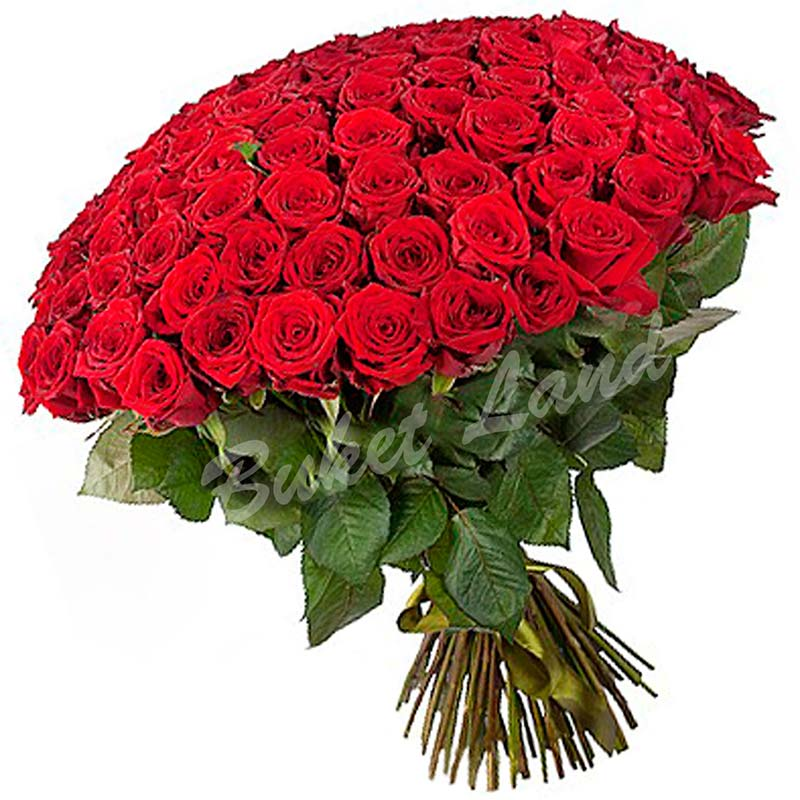 101 красная роза 1 метр