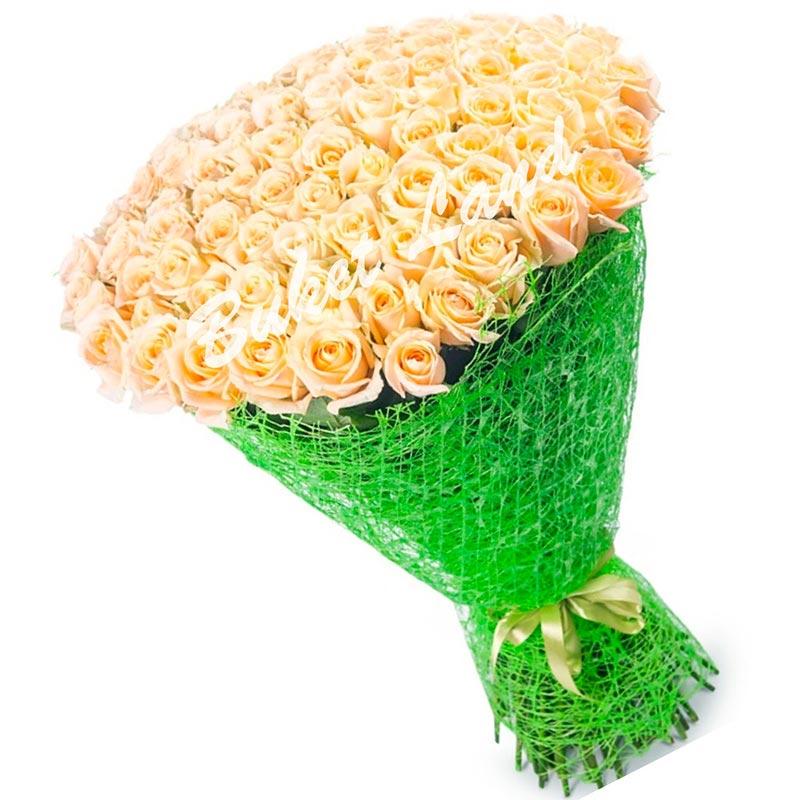 101 кремовая роза Vendella 60 см