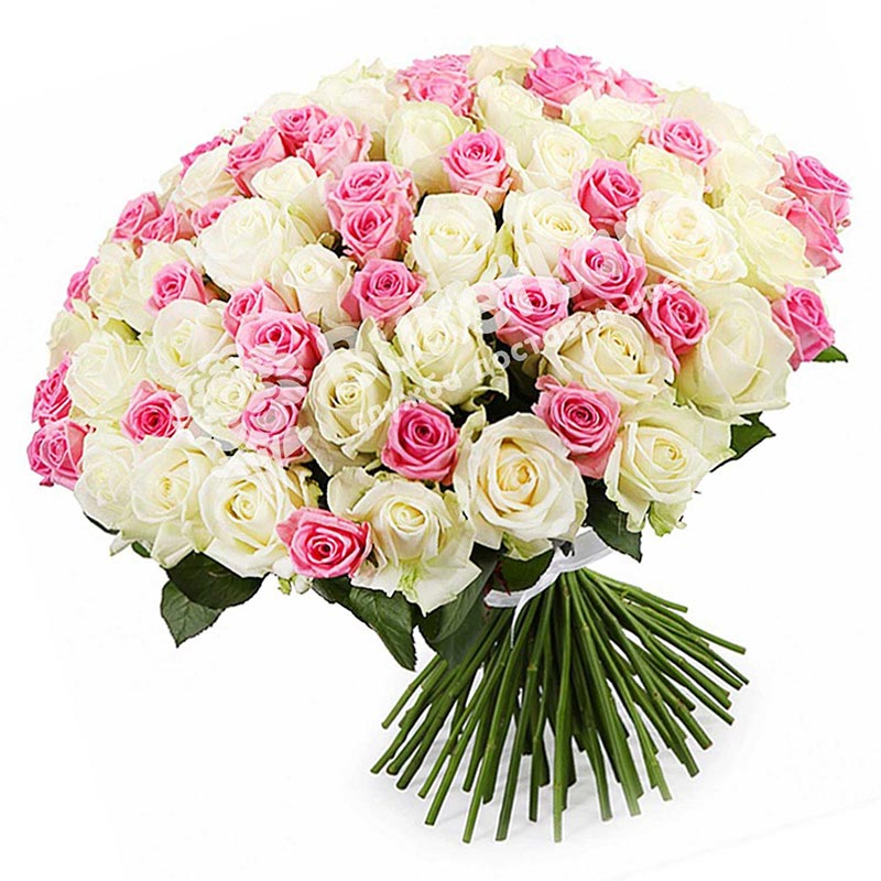 101 роза микс «бело-розовая» 60 см