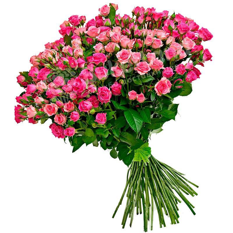 101 розовая роза спрей