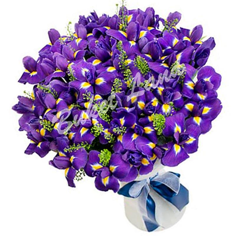 101 сине-фиолетовых ирисов