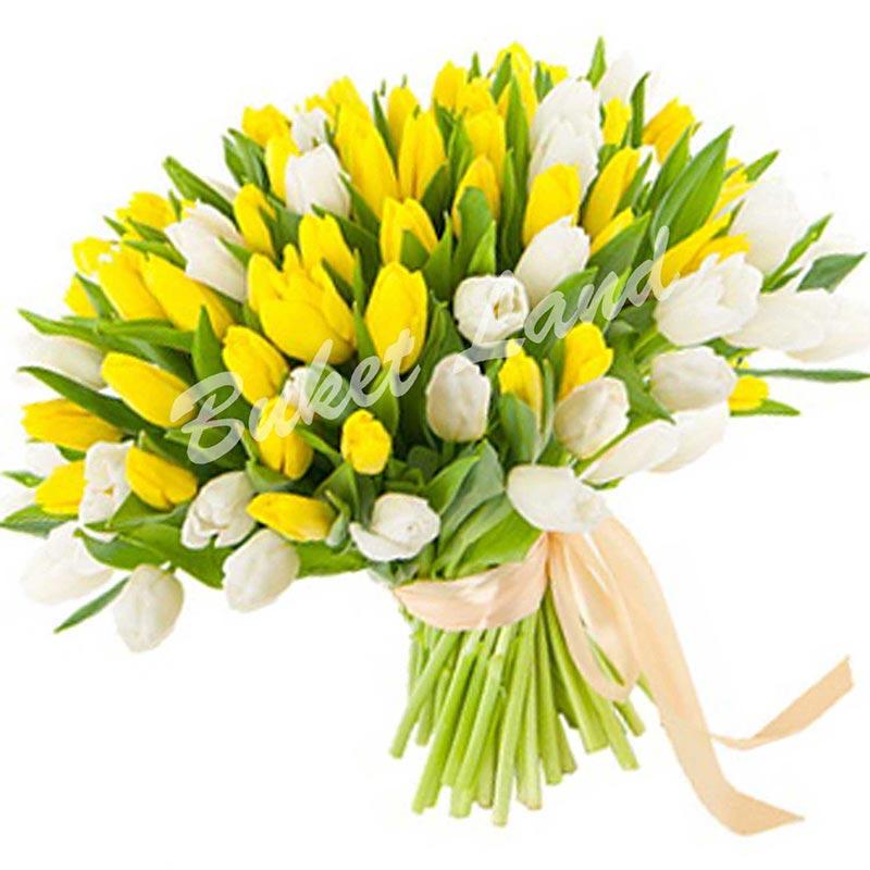 101 тюльпан микс «желто-белый»