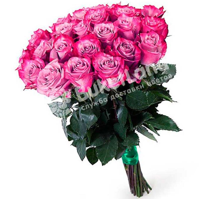 15 эквадорских роз 80 см в ассортименте