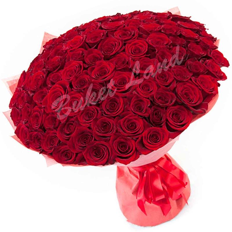 151 красная роза Гран При 60 см