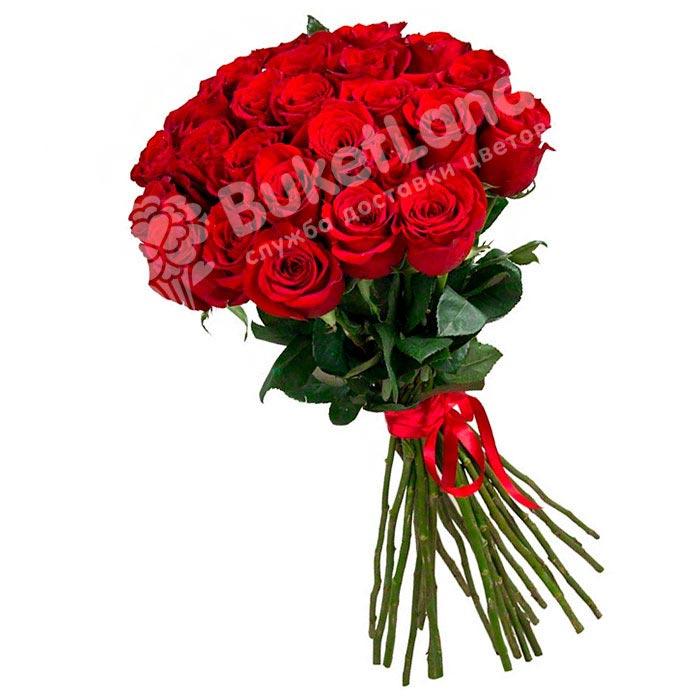 25 красных голландских роз Freedom
