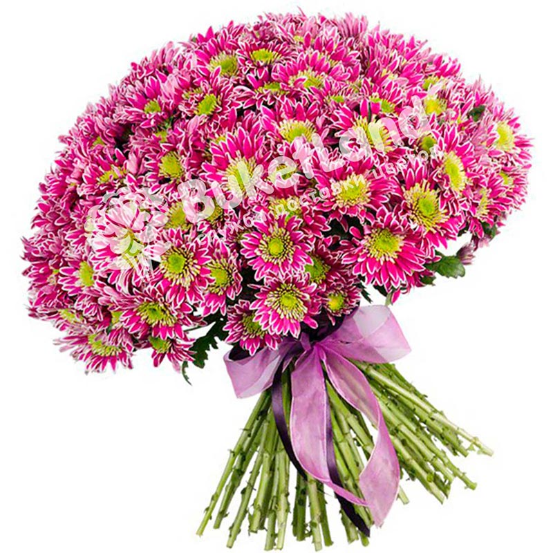 25 розовых хризантем