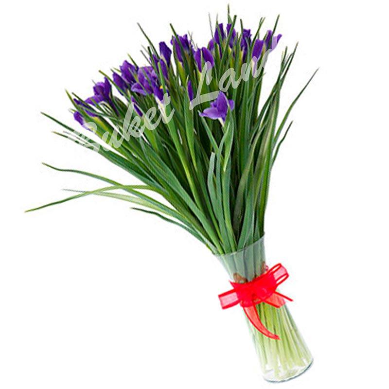 29 сине-фиолетовых ирисов