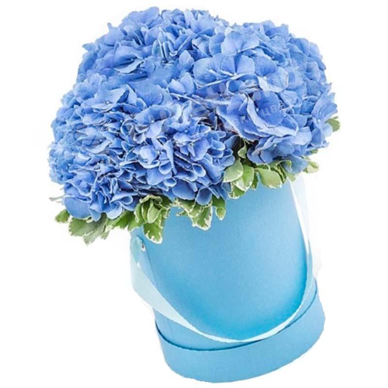 3 голубых гортензии в шляпной коробке