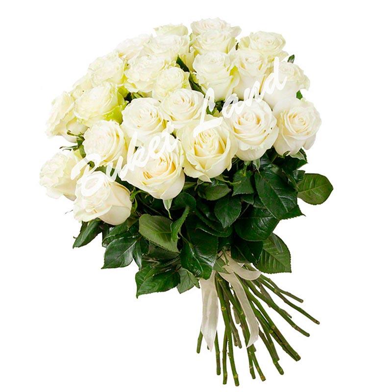 31 белая роза Аваланч 60 см