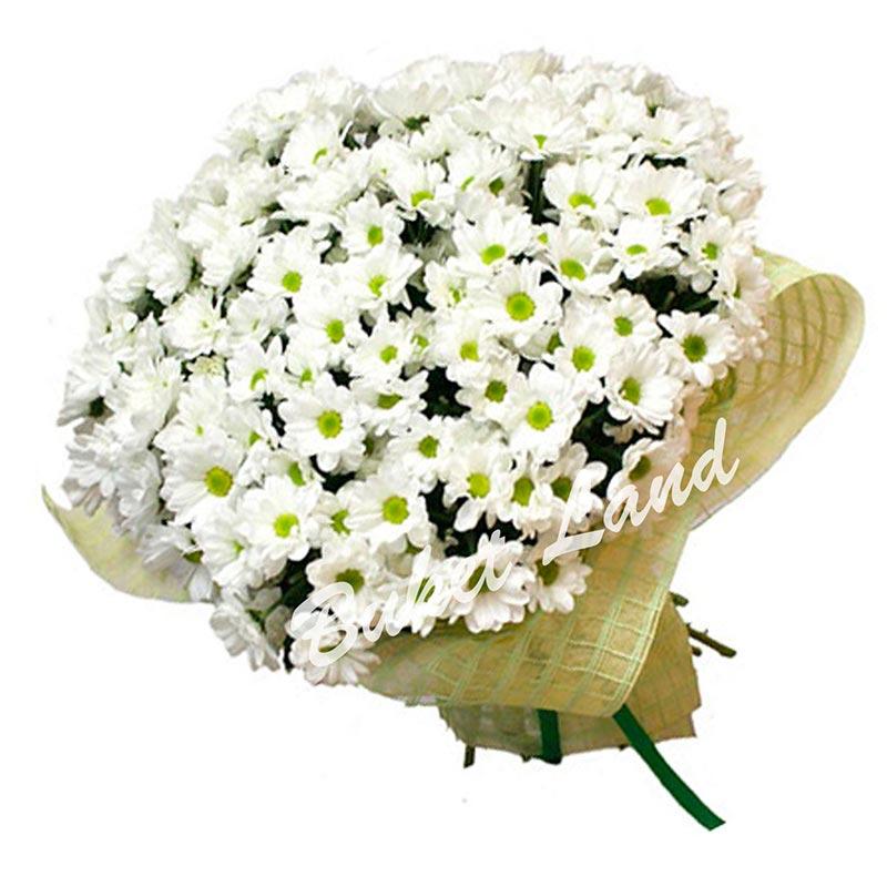 35 белая хризантема