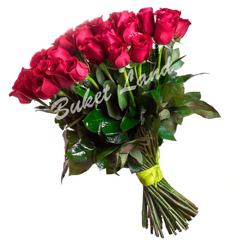 35 голландских красных роз 80 см