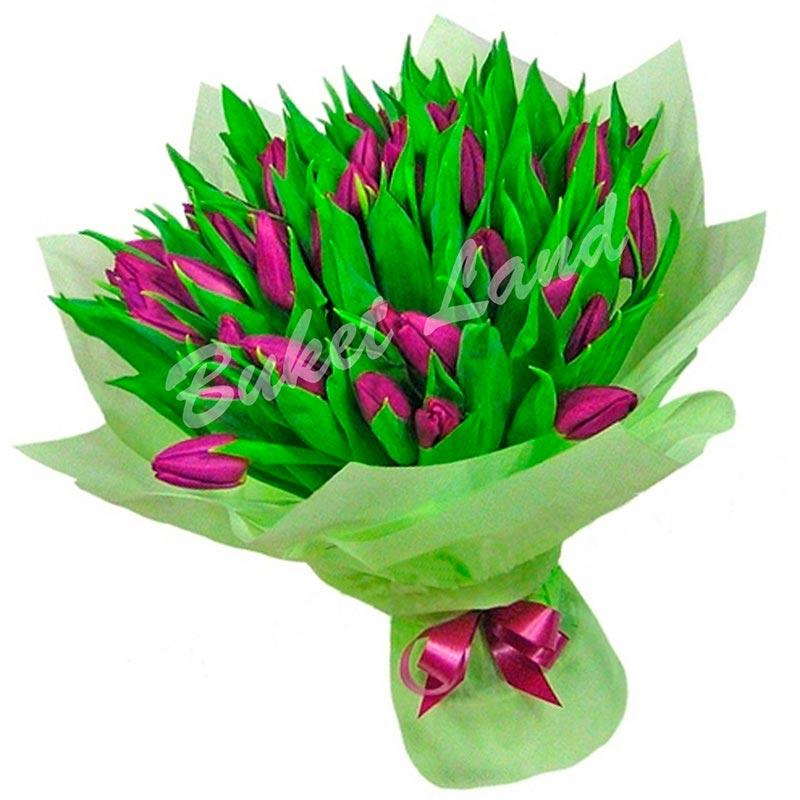 41 фиолетовый тюльпан