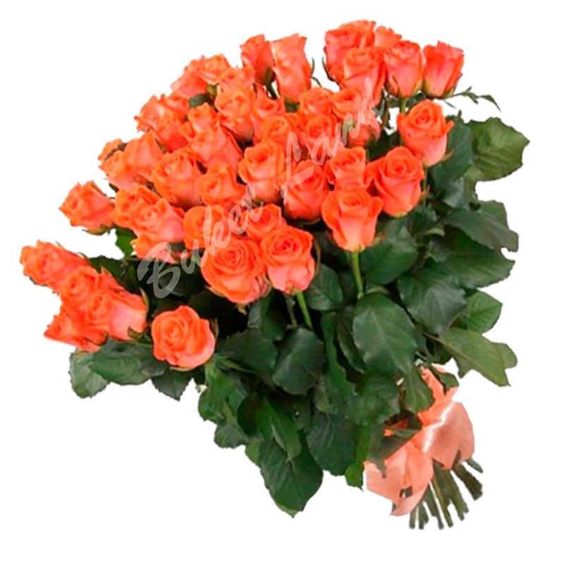 41 коралловая роза Вау 60 см