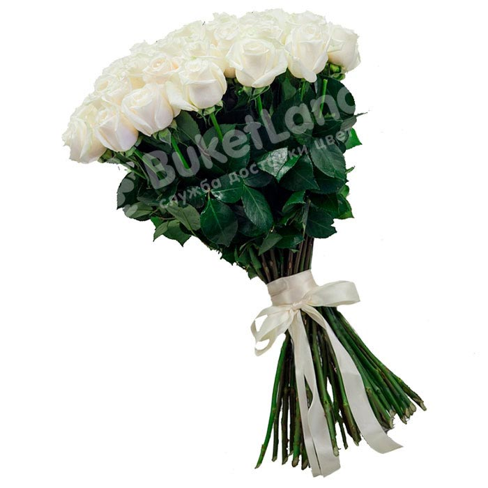 49 белых голландских роз Mondial/White Chocolate
