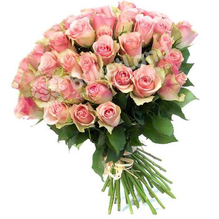 49 эквадорских роз 80 см в ассортименте