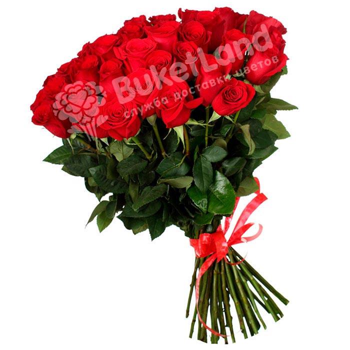 49 красных голландских роз Freedom