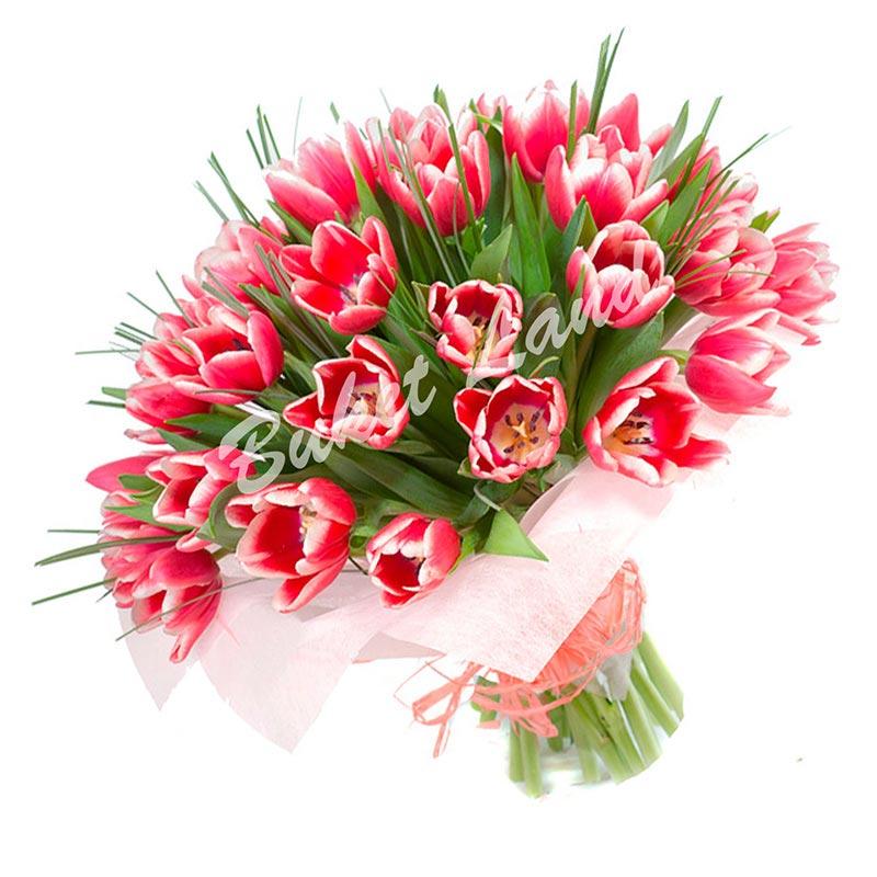 49 красных тюльпанов