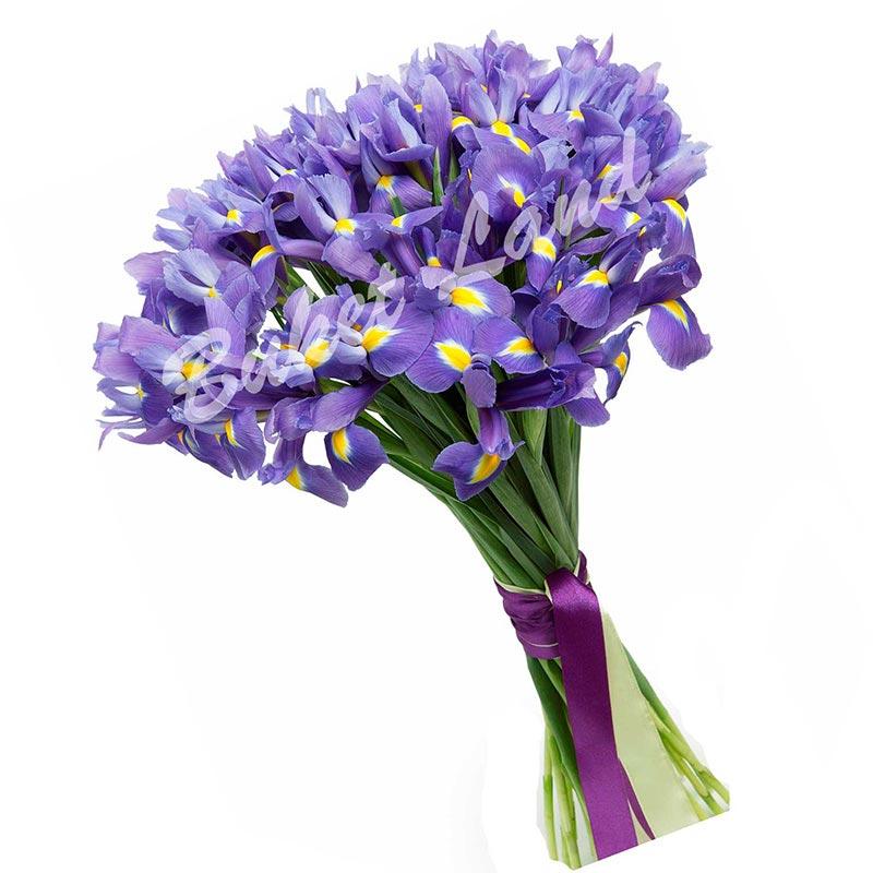 49 сине-фиолетовых ирисов