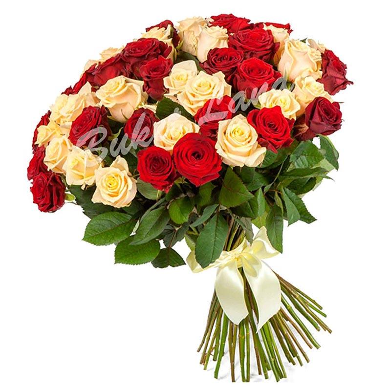 51 роза микс «красно-бежевая» 60 см