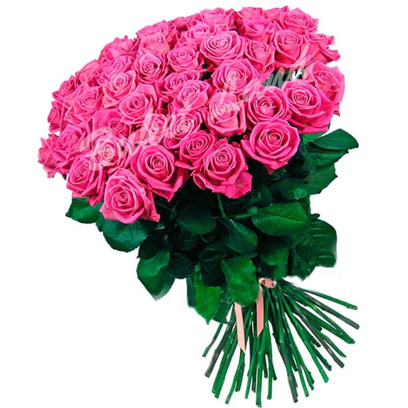 51 розовая роза 80 см