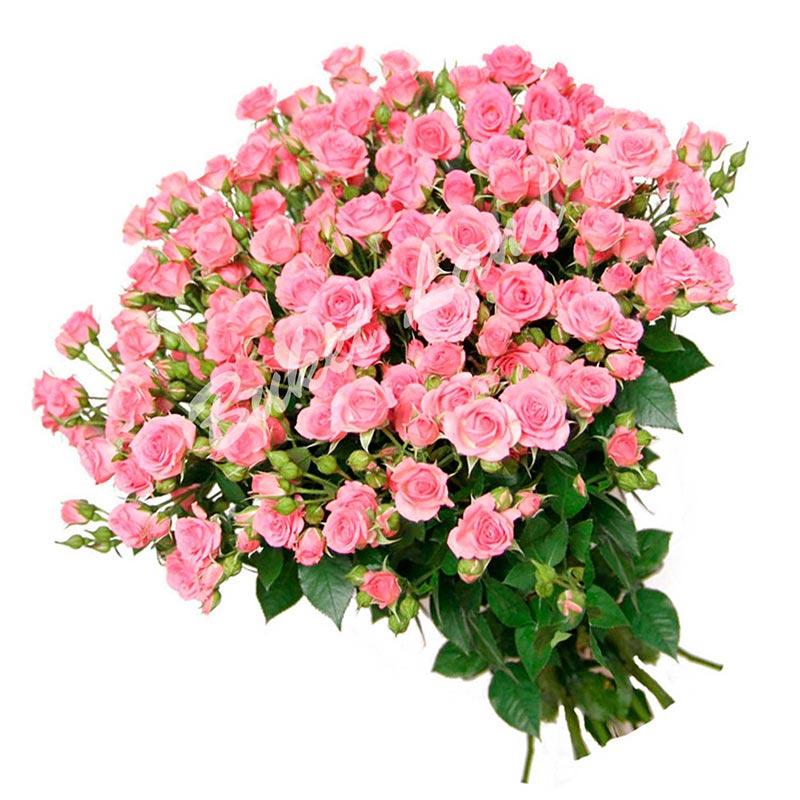 51 веточка розовой розы спрей 60 см