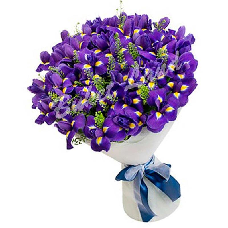59 сине-фиолетовых ирисов
