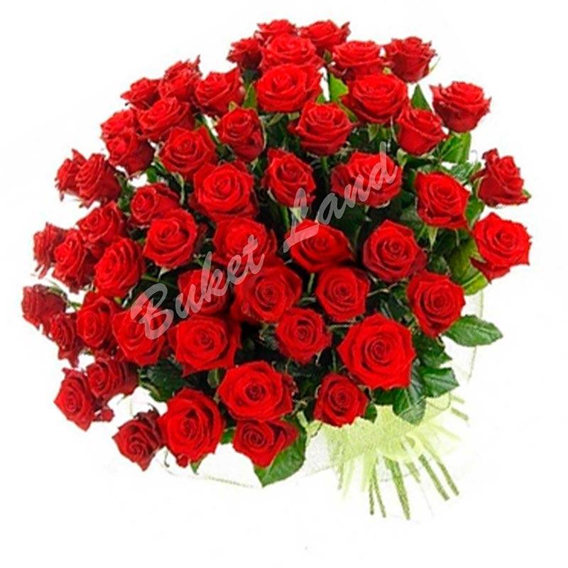 61 красная роза Гран При 60 см