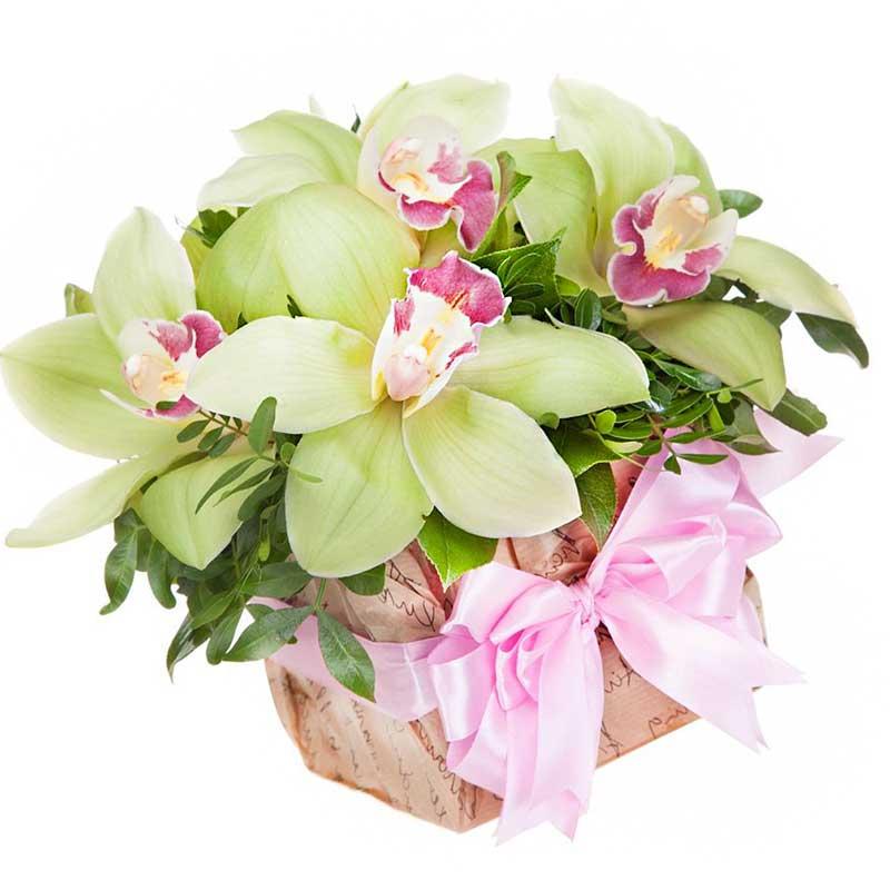 7 орхидей в оазисе