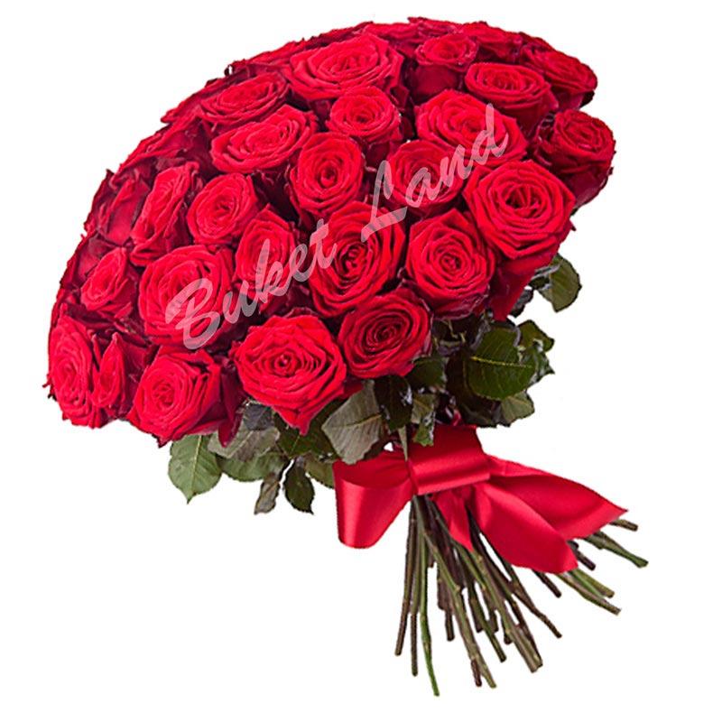 71 красная роза Гран При 60 см