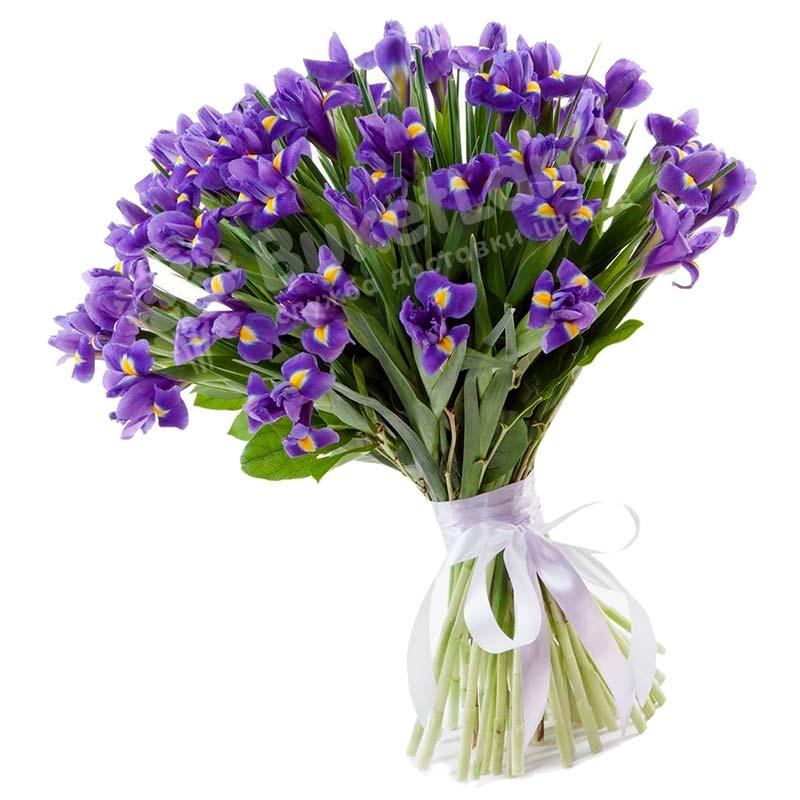 77 сине-фиолетовых ирисов