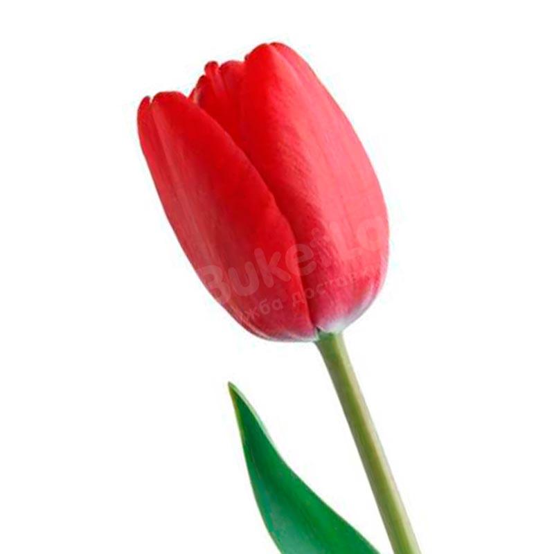 Тюльпан в ассортименте