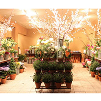 Все тонкости ведения цветочного бизнеса